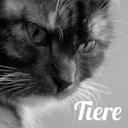 06Tiere-250x250